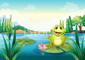 Frog,Water Lily,Pink Color,...