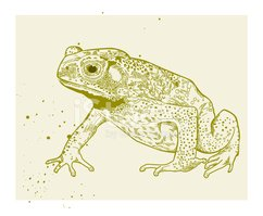 Toad,Amphibian,Reptile,Frog...