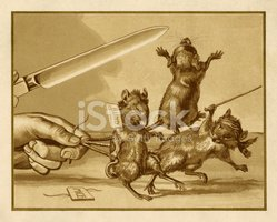 Mouse,Three Animals,Blind,R...