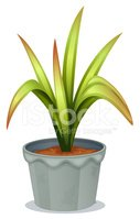 Potted Plant,Green Color,Lo...