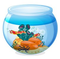 Fishbowl,Starfish,Underwate...