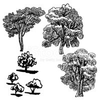 Etching,Vector,Plant,Tree,S...
