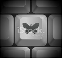 Butterfly - Insect,Computer...