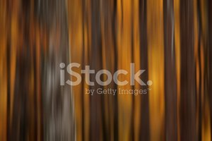 abstract autumn forest background