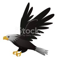 Hawk - Bird,Flying,Eagle - ...