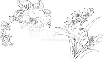 Flower,Line Art,Sketch,Ilus...