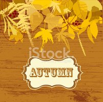 Leaf,Autumn,Brown,Gold Colo...