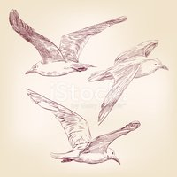 Engraved Image,Sea,Seagull,...