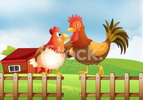 Farm,Grass,Barn,Fence,Chick...