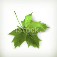 Maple Tree,Plant,Leaf,Natur...