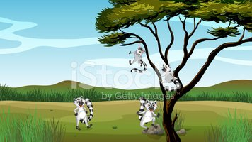 Africa,Tree,Branch,Plant,Pl...