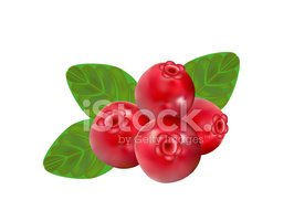 Cranberry,Lingonberry,Red,B...