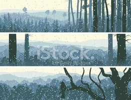 Silhouette,Woodland,Forest,...