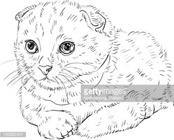 Front View,Animal,Looking,U...