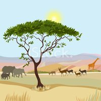 Africa,Tree,Plain,Desert,Ac...