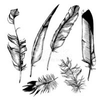 Feather,Old-fashioned,Pen,W...