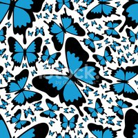Animal,Butterfly - Insect,N...