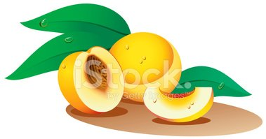 Peach,Fruit,Slice,Stone,Vec...