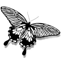 Butterfly - Insect,Insect,A...