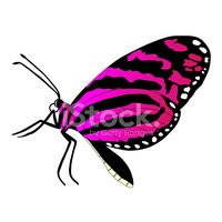 Butterfly - Insect,Isolated...