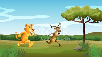 Running,Tiger,Grass,Stone,C...