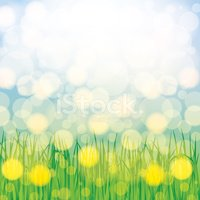 May,Grass,Sky,Flower,Natur...