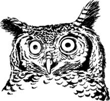 Owl,Sketch,Etching,Nature,A...