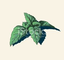 Tea Crop,Mint Leaf - Culina...