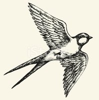 """Vector drawing of a series """"Birds"""". Swallow"""