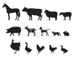 Livestock. Animals silhouettes isolated over white background.