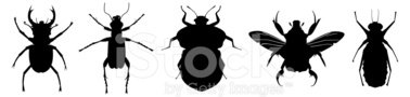 Insect,Aphid,Stag Beetle,Si...