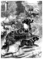 Dog,Old-fashioned,The Past,...