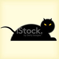 Domestic Cat,Black Color,Fe...