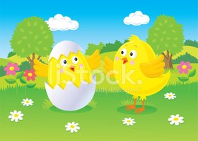 Baby Chick Hatching from Egg While Another Watches
