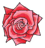 Rose - Flower,Woodcut,Rose ...