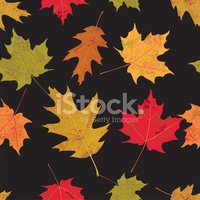 Maple Leaf,Falling,Leaf,Gre...