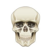 Front View,Human Skull,Mour...