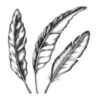 Black feathers. Three objects.