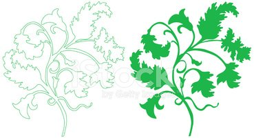 Flower,Outline,Floral Patte...