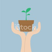 Growth,Plant,Cultivated,See...