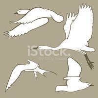 Seagull,Duck,Heron,Flying,T...
