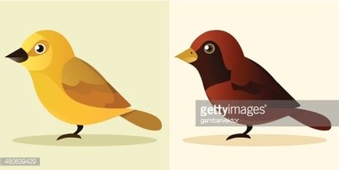 Animal,Bird,Colors,Brown,Ye...