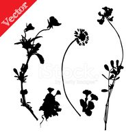 Silhouette,Collection,Natur...
