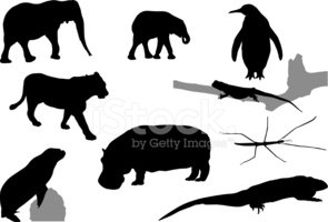 Elephant Calf,Vector,Lizard...