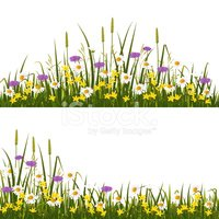 Flower,Field,Purple,Grass,S...