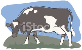 Cow,Cattle,Grazing,Farm,Ilu...