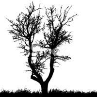 Tree,Silhouette,Vector,Whit...