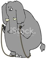 Elephant With A Jump Rope
