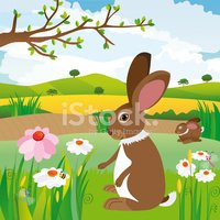 Meadow,Rabbit - Animal,Cele...