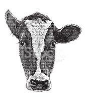Cow,Dairy Cattle,Ilustratio...